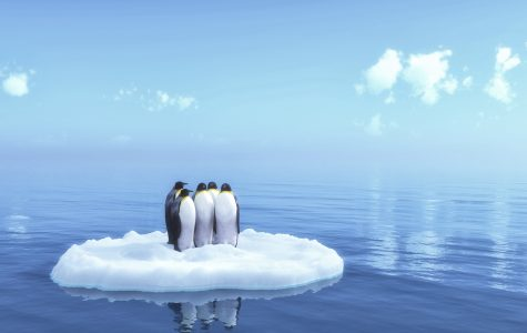 Climate Change Affects Penguins