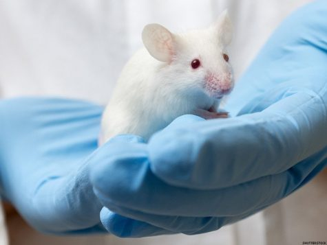 HIV Elimination in Mice