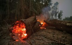 2019 already a record-breaking year for forest fires in the Amazon